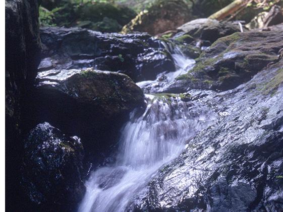 神泉の名水